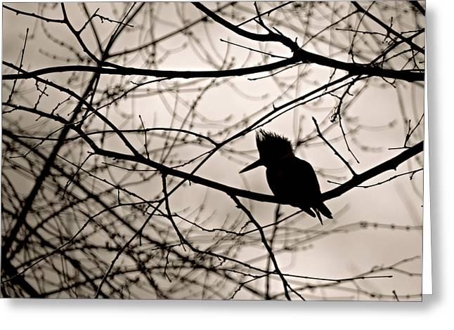 Kingfisher Silhouette Greeting Card