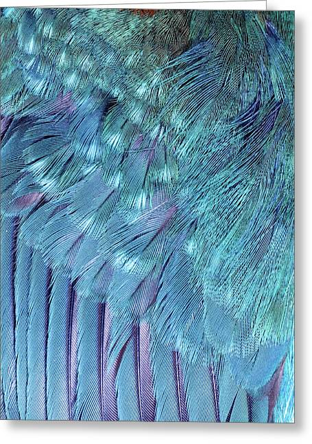 Kingfisher Wing Feathers Greeting Card by John Devries/science Photo Library