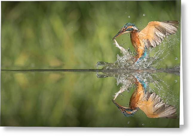 Kingfisher With Catch. Greeting Card by Andy Astbury