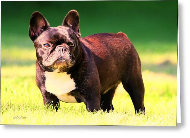 King's Frenchie - French Bulldog Greeting Card