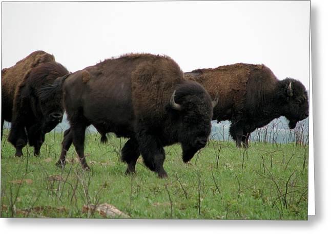 Kings Of The Prairie Greeting Card