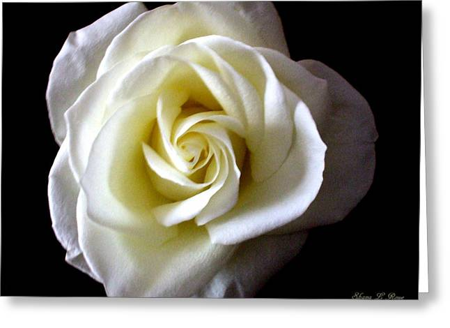 Kiss Of A Rose Greeting Card