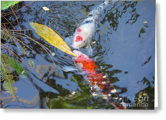 Kissin' Koi Greeting Card