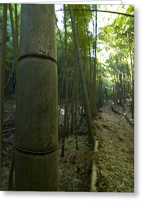 Kissing Bamboo Greeting Card by Aaron Bedell