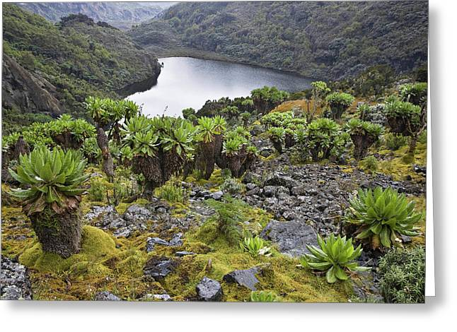 Kitandara Valley, Rwenzori, Uganda Greeting Card by Martin Zwick
