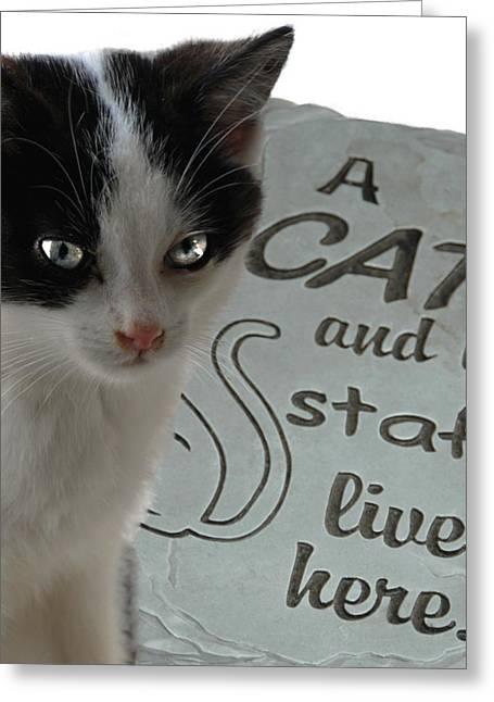 Kitten 219 Greeting Card by Joyce StJames