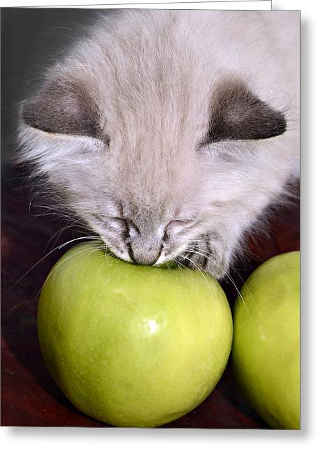 Kitten And An Apple Greeting Card