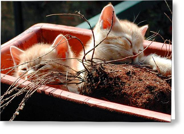 Kitten Flowers Greeting Card by Dorothy Berry-Lound