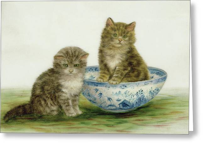 Kitten In A Blue China Bowl Greeting Card by Bessie Bamber