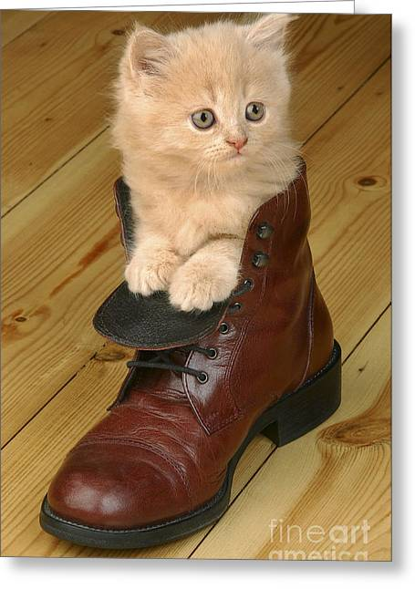 Kitten In Shoe Ck181 Greeting Card by Greg Cuddiford