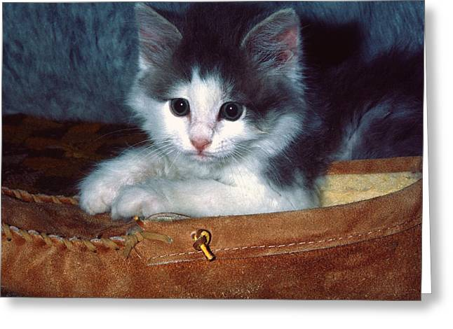 Greeting Card featuring the photograph Kitten In Slipper by Sally Weigand