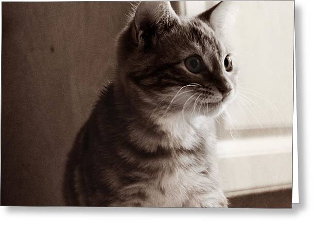 Greeting Card featuring the photograph Kitten In The Light by Melanie Lankford Photography