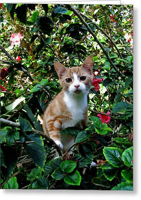 Kitten Greeting Card by Pamela Walton
