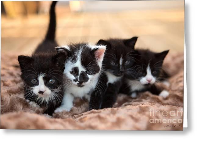 Kitten Sisters Greeting Card by Iris Richardson