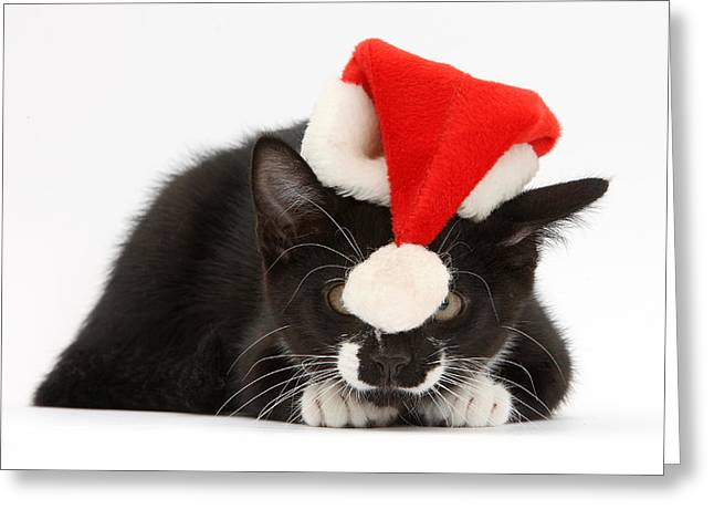 Kitten With Christmas Hat Greeting Card