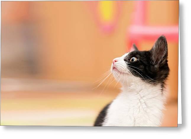 Kitten Greeting Card by Wladimir Bulgar