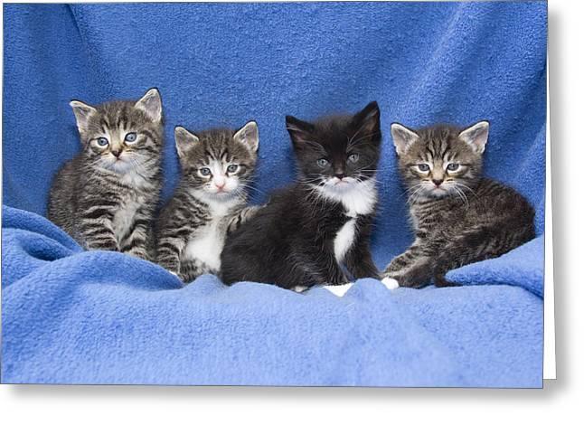 Kittens Sitting On Blanket Greeting Card