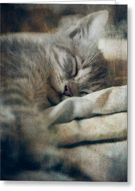 Kitten's Sweet Dream #01 Greeting Card