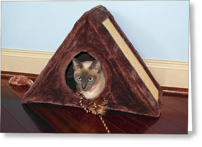 Kitty A-frame Greeting Card by Sally Weigand