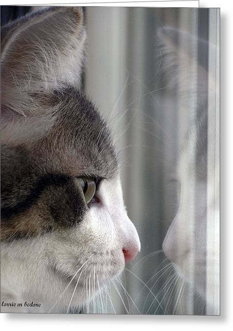 Kitty Cat Reflection Vert Greeting Card by Lorrie Bedore