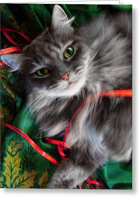 Kitty Christmas Card Greeting Card