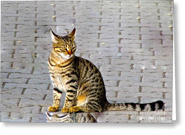 Kitty In Sevastopol Russia Greeting Card