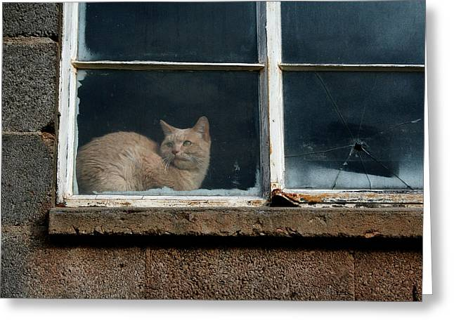 Kitty In The Window Greeting Card by Ric Bascobert