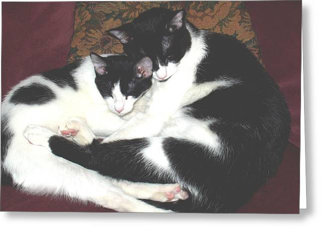 Kitty Love Greeting Card by Marna Edwards Flavell