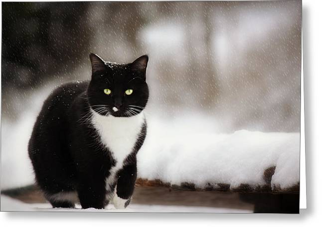 Kitty Snow Play Greeting Card by Melanie Lankford Photography