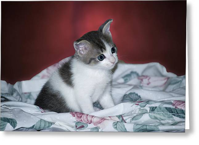 Kitty Taking A Moment To Chill Greeting Card by Thomas Woolworth