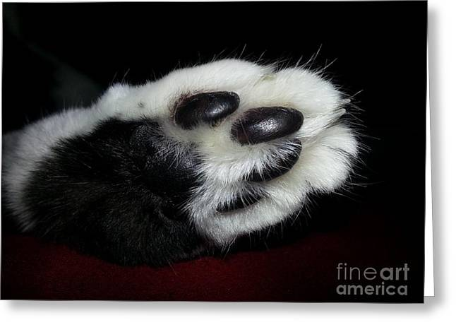 Kitty Toe Beans Greeting Card by Heather L Wright