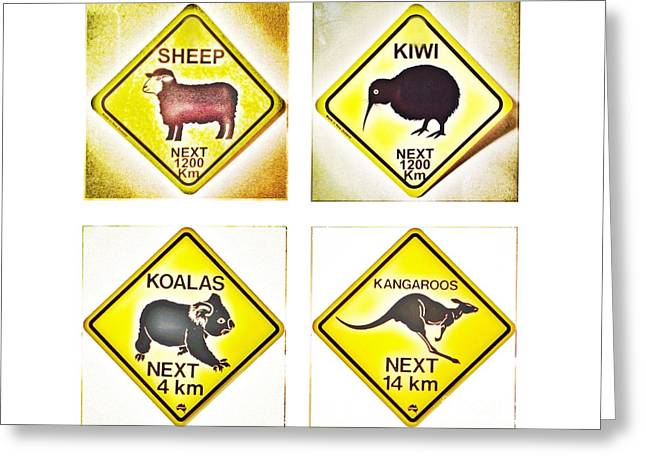 Kiwi Aussi Road Signs Greeting Card by HELGE Art Gallery