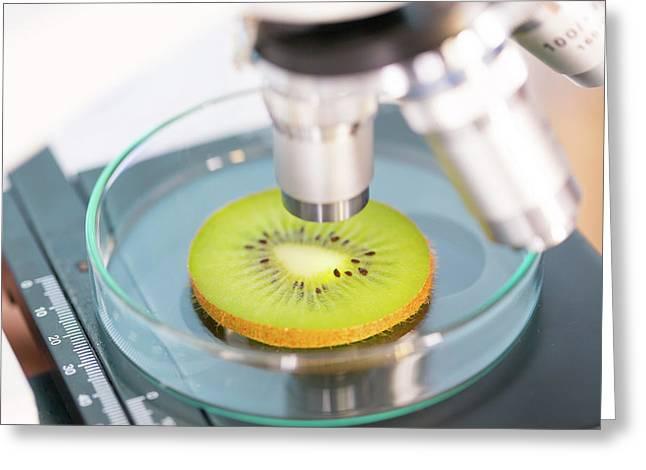 Kiwi Fruit Being Examined Greeting Card by Wladimir Bulgar