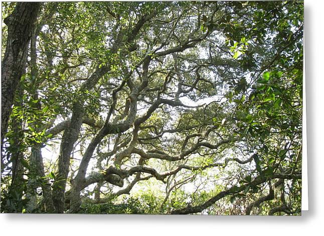 Knarly Oak Greeting Card