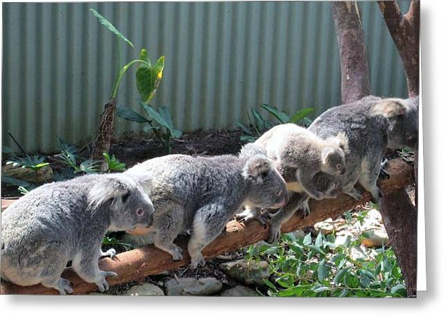 Koala Team Greeting Card