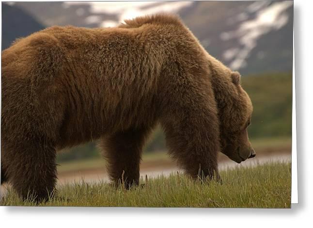 Kodiak Bears Greeting Card