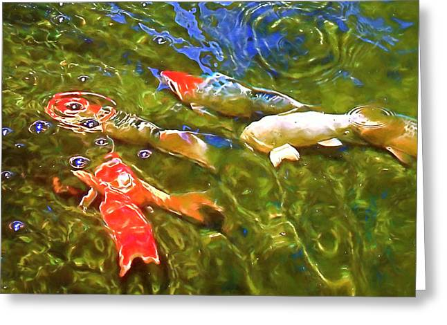 Koi 1 Greeting Card by Pamela Cooper