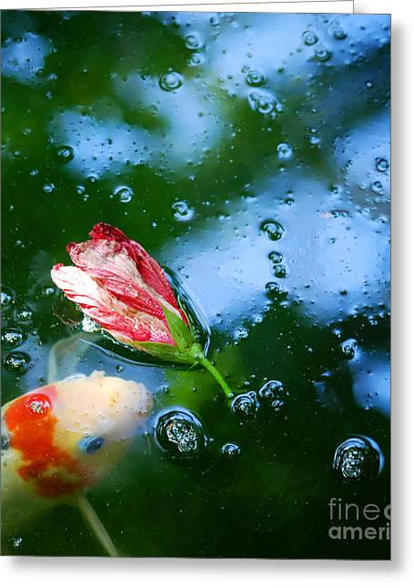 Koi And Floating Flower Greeting Card by Nancy Mueller