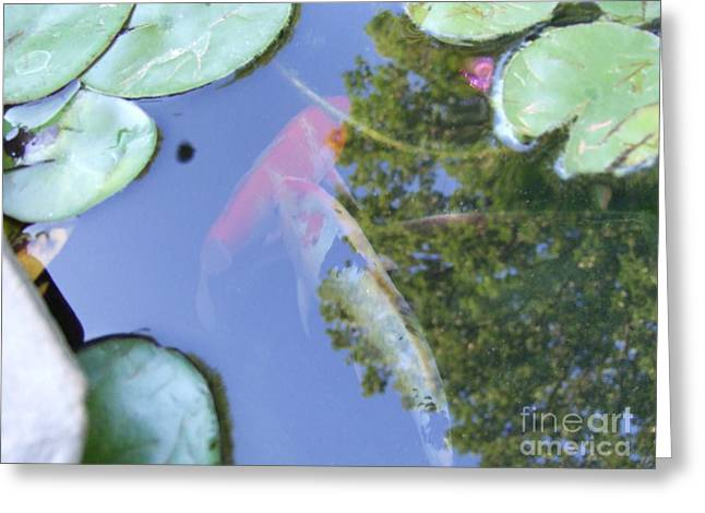 Greeting Card featuring the photograph Koi by Deborah DeLaBarre