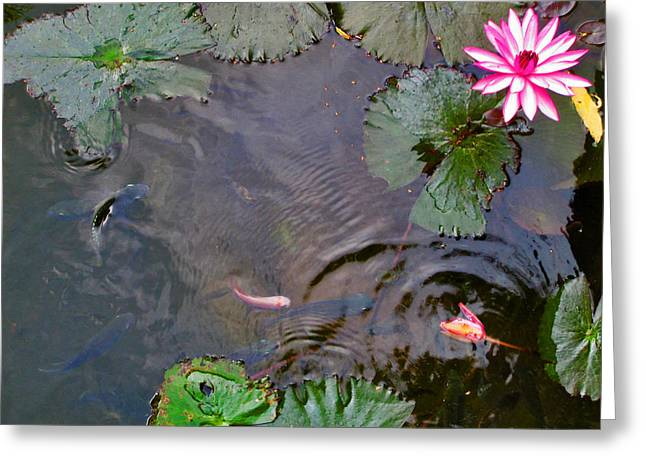 Koi. Lotus. Phu Quoc. Vietnam. Greeting Card by Andy Za