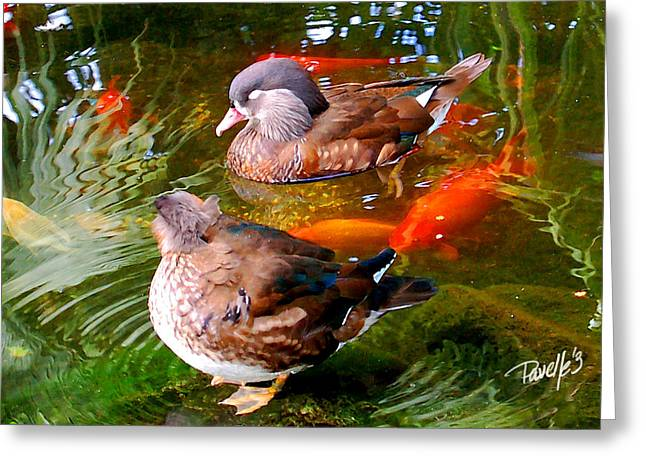 Koi Pond Ducks Greeting Card by Jim Pavelle