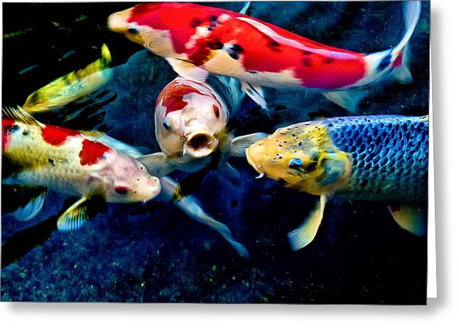 Greeting Card featuring the photograph Koi Quartet by Joseph Hollingsworth