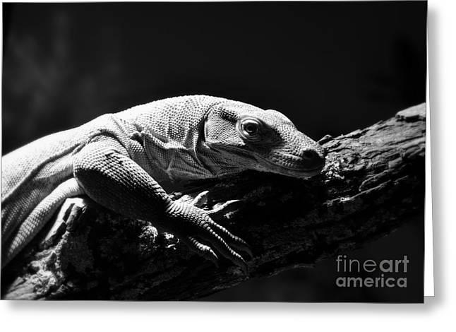 Greeting Card featuring the photograph Komodo Dragon by Lisa L Silva