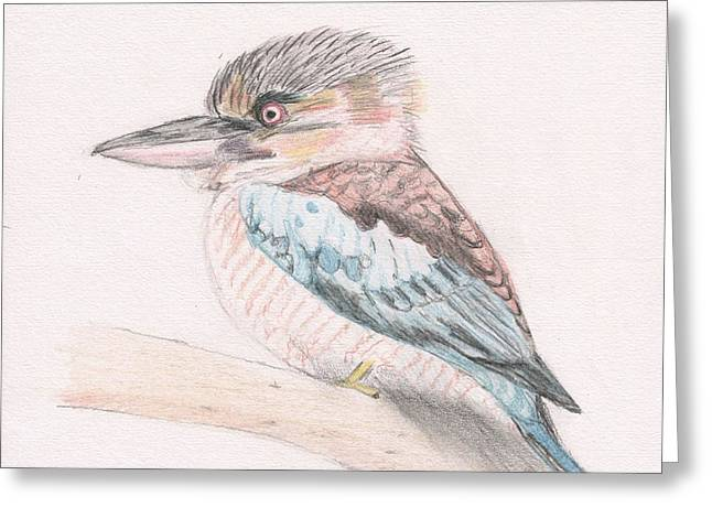 Kookaburra Cuteness Greeting Card