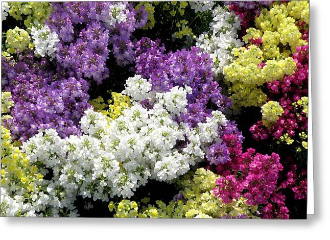 Many Colors Make A Beautiful Garden Greeting Card by Jean Hall