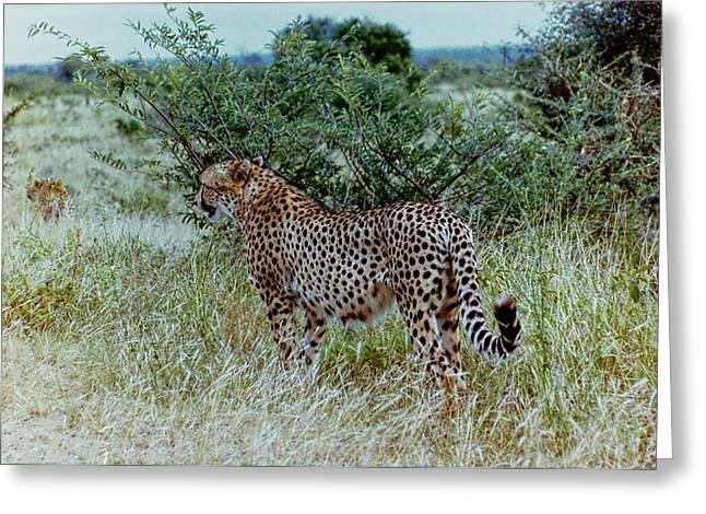 Krugger Cheetah Greeting Card