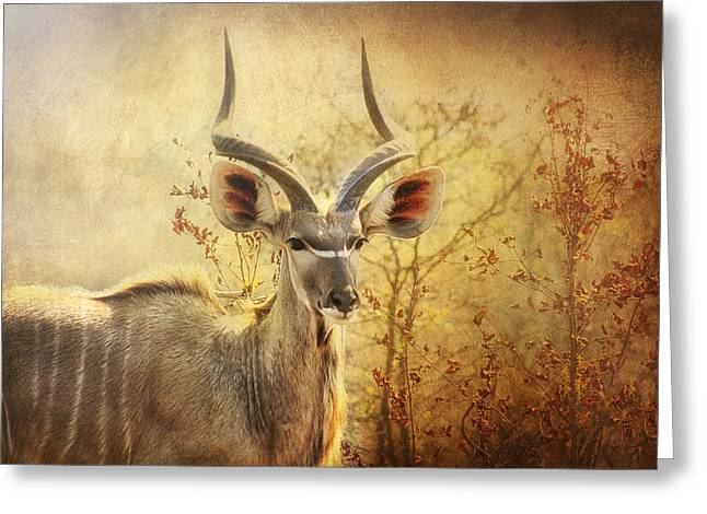 Kudo In The Wild Greeting Card by Kim Andelkovic