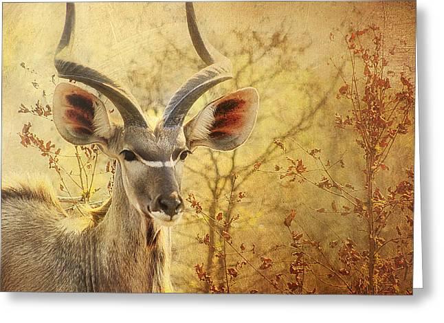 Kudo Greeting Card by Kim Andelkovic