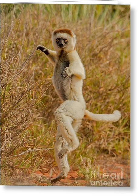 Kung Fu Lemur Greeting Card by Ashley Vincent