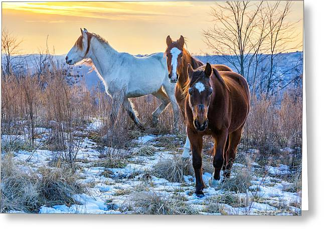 Ky Wild Horses Greeting Card